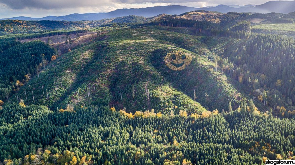 smiley face forest trees oregon
