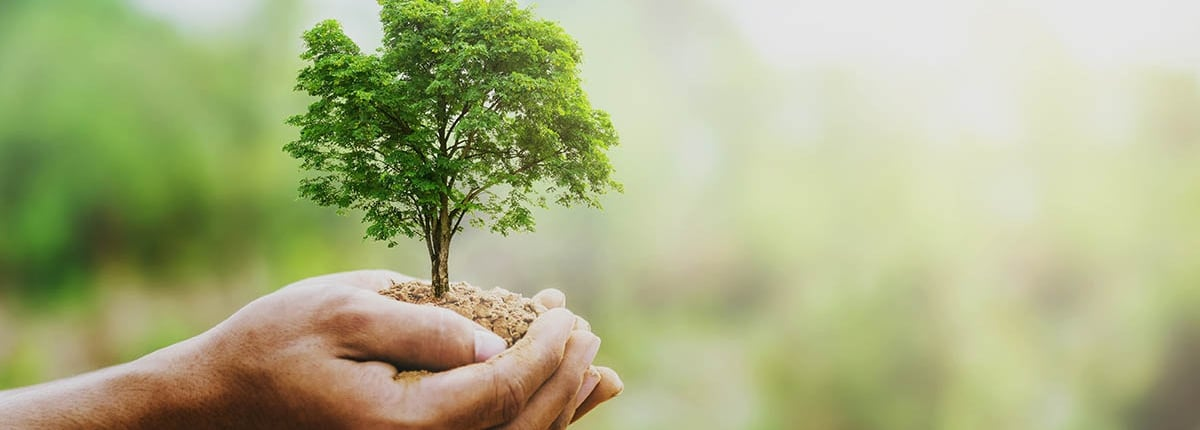 earth day tree in hands balcas energy